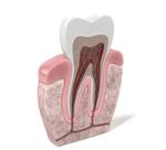 capas-dientes